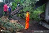 BPBD Kulon Progo mencatat 40 kejadian pohon tumbang sebabkan rumah rusak