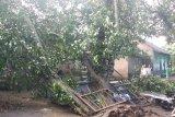 BPBD Bantul : 129 titik kejadian terdampak cuaca ekstrem