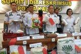 Gula rafinasi beredar di Kalteng, Disperindag akui kecolongan