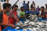 Ekspor ikan Riau tidak terdampak COVID-19