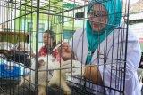 Vaksinasi rabies di Yogyakarta didominasi kucing
