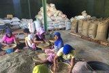 Bupati Lombok Utara mengajak petani kopi perbaiki perlakuan pascapanen