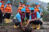 Pertamina Cilacap tanam 50.000 bibit mangrove di  Pulau Momongan