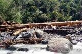 BKSDA Agam temukan kayu diduga ditebang mesin di hulu sungai lokasi banjir bandang