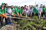 200 anggota Persit ikut bersihkan eceng gondok  Danau Tondano