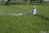 Petani menyemprotkan cairan insektisida bantuan Dinas Pertanian dan Perkebunan untuk mengendalikan hama Wereng Batang Cokelat (WBC) yang menyerang tanaman padi di Desa Paron, Kediri, Jawa Timur, Kamis (19/3/2020). Data dari Dinas Pertanian dan Perkebunan Kediri menyatakan WBC telah menyerang tanaman padi seluas 25,8 hektar sehingga harus dilakukan penyemprotan serentak pada lahan pertanian seluas 326,5 hektar untuk memutus mata rantai perkembangan hama. Antara Jatim/Prasetia Fauzani/zk.