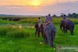 Petugas dan warga halau gajah liar di TNWK