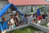 DKP Sulteng kucurkan bantuan benih untuk budidaya kreatif Ansor