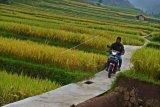 2.753 desa di Sumatera Selatan belum  terima pencairan dana desa