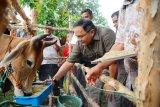 Musi Banyuasin gandeng IPB kembangkan  Sekolah Peternakan Rakyat