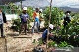 Kebun Raya Sipirok terima hibah ratusan jenis tumbuhan dari LIPI