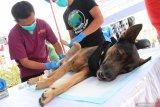 6.464 ekor hewan di Kalbar divaksin rabies