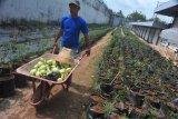 Stok pangan Sumatera Selatan cukup  hingga empat bulan