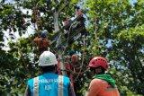 PLN menyiapkan listrik Wisma Atlet dan RS Pertamina Jaya