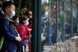 Petugas kebun binatang Shanghai tewas diserang kawanan beruang
