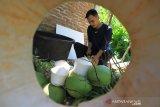 Pekerja melakukan proses pembuatan kelapa jelly di Desa Peunaga Rayeuk, Kecamatan Meureubo, Aceh Barat, Aceh, Selasa (24/3/2020). Pelaku usaha mengaku produksi kelapa jelly yang dijual Rp 15.000 per buah sejak dua hari terakhir menurun drastis, dari biasanya mencapai 150 - 350 buah, sekarang hanya 10 - 20 buah kelapa jelly per hari pasca intruksi penutupan warung kopi, kafe, tempat hiburan dan objek-objek wisata guna mencegah penyebaran virus Corona (COVID-19) oleh Pemerintah setempat. Antara Aceh/Syifa Yulinnas.