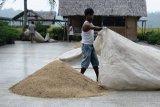 Produksi beras Indonesia pada April diprediksi 5,03 juta ton