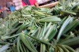 Petani Vanili Sulut khawatirkan harga tidak menentu
