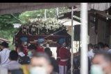 Petugas membawa peti jenazah Almarhum Ibunda Presiden Joko Widodo untuk dimakamkan di komplek pemakaman keluarga di Dukuh Mandu, Desa Nolligaten, Gondangrejo, Karanganyar, Jawa Tengah, Kamis (26/3/2020). Almarhum Ibunda Presiden Joko Widodo, Sujiatmi Notomiharjo meninggal dunia pada rabu (25/3) pukul 16:45 WIB pada usia 77 tahun karena kanker. ANTARA FOTO/Mohammad Ayudha/nym.