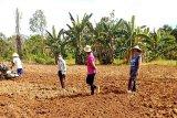 PPL Gumas tetap bina petani, dengan mengedepankan pencegahan COVID-19