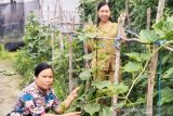 BPP Mihing Raya buktikan sayuran potensial dikembangkan