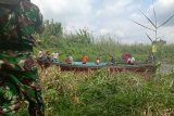 Usai bantu istri, warga Inhil hilang diterkam buaya