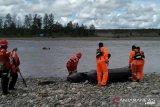 Pendulang emas ditemukan meninggal dunia di Mile 26 Timika Papua