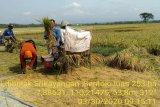 Kulon Progo jamin ketersediaan beras hingga Desember 2020