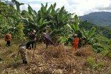 Basarnas hentikan pencarian petani hilang di Tasokko Mamuju Tengah