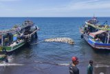 Pemkab Minahasa Tenggara antisipasi kerugian usaha perikanan