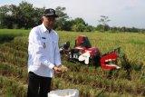 Pemkab Sleman menjamin ketersediaan pangan hingga enam bulan ke depan
