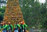 PESTA BUAH DURIAN WONOSALAM JOMBANG. Pengunjung berebut buah durian saat pesta durian atau Kenduren di Lapangan Wonosalam, Kabupaten Jombang, Jawa Timur, Minggu (8/3/2020). Pesta buah durian tersebut merupakan ritual tahunan para petani 9 desa di Wonosalam, Jombang itu sebagai bentuk syukur atas panen yang melimpah. Antara Jatim/Syaiful Arif/zk