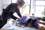 Kucing peliharaan di Inggris hewan pertama yang positif corona