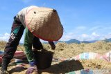 Padang Pariaman pastikan ketersediaan pangan mencukupi hingga tiga bulan ke depan