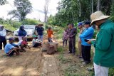 Pemkab akan bantu  mesin panen padi untuk warga Tongka