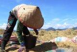 Pemkab Padang Pariaman pastikan ketersediaan pangan warga hingga tiga bulan ke depan