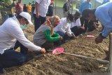 Petani di Sigi dapat bantuan tiga ton bibit bawang