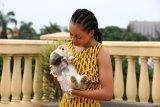 Binatang ini jadi hiburan orang Nigeria saat karantina wilayah