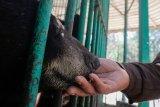 Penjaga dan hewan saling menemani di kebun binatang Kairo, lawan kesepian