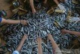 Ekspor ikan hidup sumsel meningkat 249 persen  di tengah COVID-19