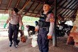 Pelaku judi sabung ayam di Sampit kocar-kacir hindari polisi