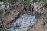 Anak gajah ditemukan jadi bangkai