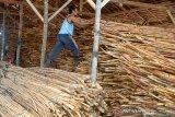 Pekerja menata komoditas hasil hutan non kayu, rotan di salah satu usaha penampungan, di Banda Aceh, Aceh, Selasa (7/4/2020). Menurut pedagang penampung di daerah itu, persediaan rotan untuk bahan baku mebel menumpuk karena pemasaran ke luar provinsi Aceh sejak beberapa pekan terakhir terhenti dampak dari pandemi COVID-19. Antara Aceh/Ampelsa.
