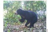 Hati-hati ada beruang madu di jalur wisata Kelok 44 Agam