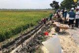 Ditengah pandemi COVID-19, Kementan genjot padat karya sektor perkebunan dengan upah kerja