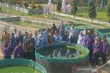 Realiasi produksi perikanan budi daya di Kulon Progo mencapai 16.666 ton