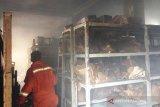 Kantor Dinas Kearsipan dan Perpustakaan Pesisir Selatan terbakar, ribuan buku dan arsip tak bisa diselamatkan