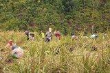 Petani muda Indonesia hanya 2,7 juta orang
