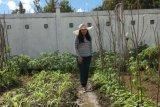 Masyarakat Gumas diajak manfaatkan pekarangan untuk bercocok tanam selama #dirumahaja