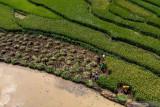Program Irigasi Kementan sukses airi 53.800 hektare lahan Jateng